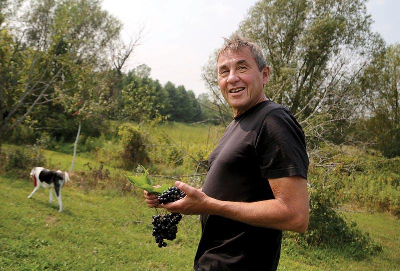 Science-driven Minnesota wines pioneer the unforgiving North